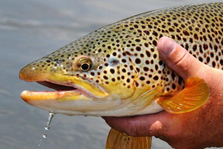 35b64ae51993e Best Pennsylvania Trout Streams