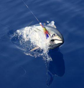 best tuna lure to catch bluefin
