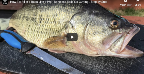 how to fillet a bass