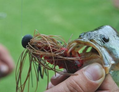 Best Perch Lures   Fishmasters com