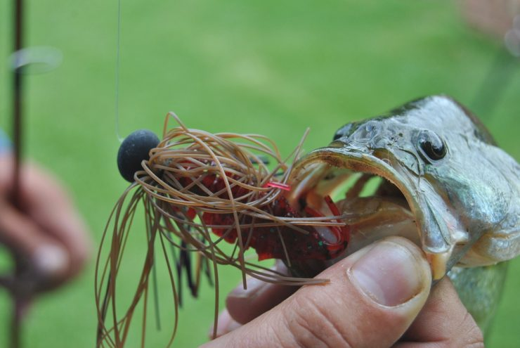 Best Bass Lures for Every Occasion | Fishmasters com