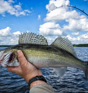 walleye fishing with lure