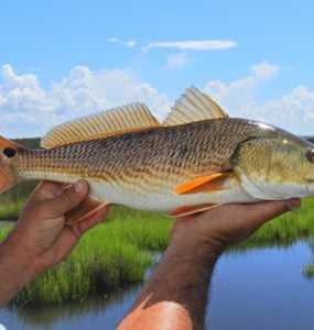 lures for redfish
