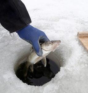 walleye ice fishing