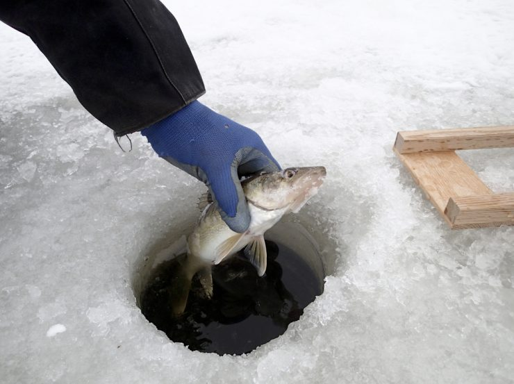 walleye ice fishing
