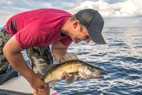 Chautauqua Lake walleye fishing
