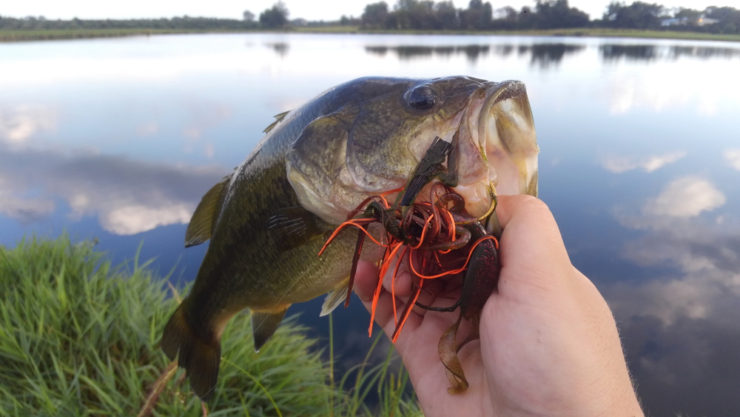 best jig trailers for bass fishing