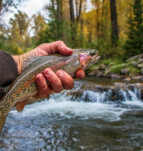 trout fishing on a creek in new york