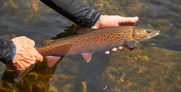 tips for catching trout