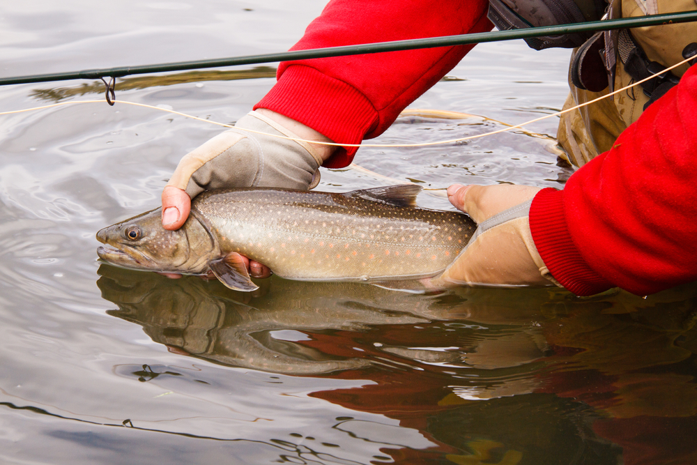 fishing for bull trout