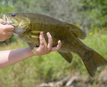 holding a smallmouth bass