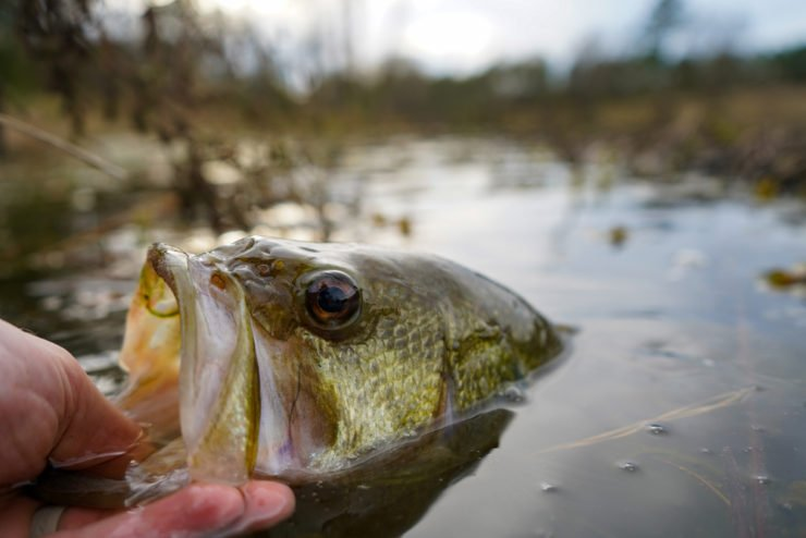 largemouth bass fishing near dayton ohio