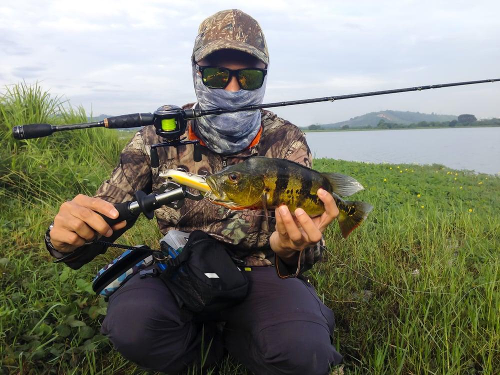 catching Peacock Bass