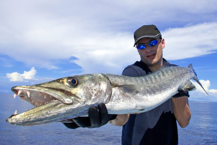 fisherman holding a barracuda