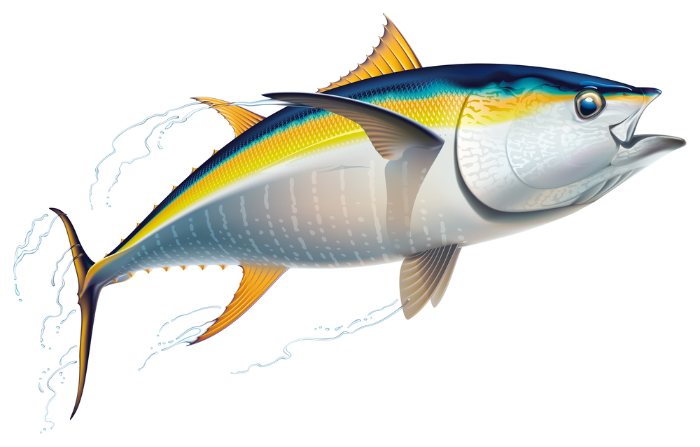 yellowfin identification marks