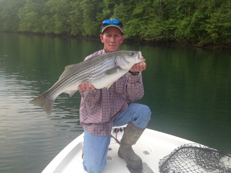 colt bass fishing