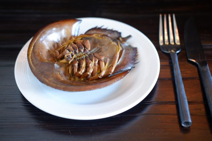 horseshoe crab on a plate