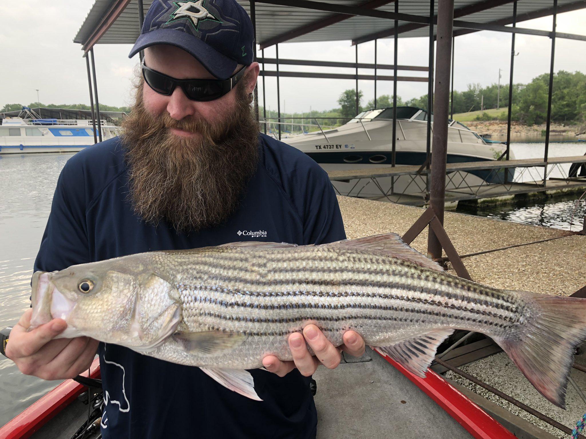 texas fins lake whitney striper fishing