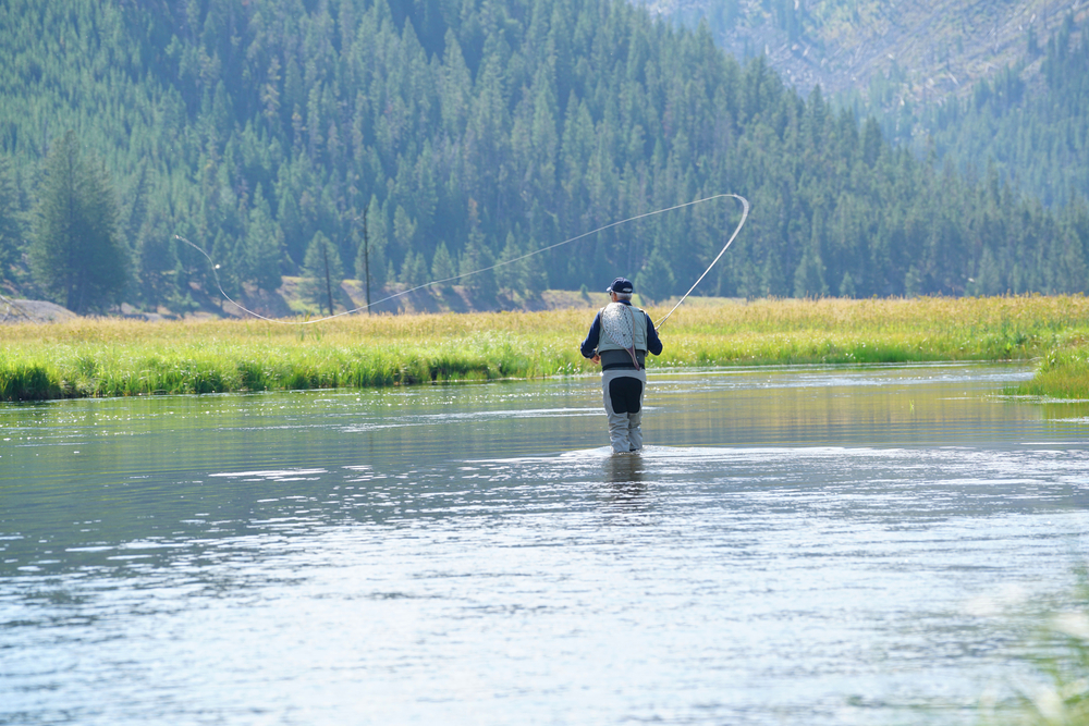 Fly-fisherman fishing in Madison river