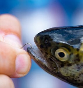 small sized hook for trout fishing