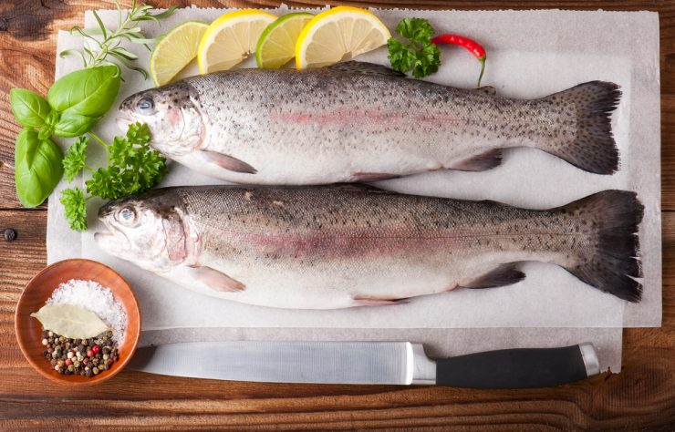 uncooked raw trout