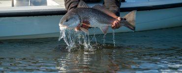 Fly fishing for Redfish in Louisiana