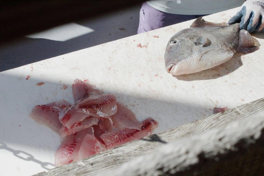 raw trigger fish filets