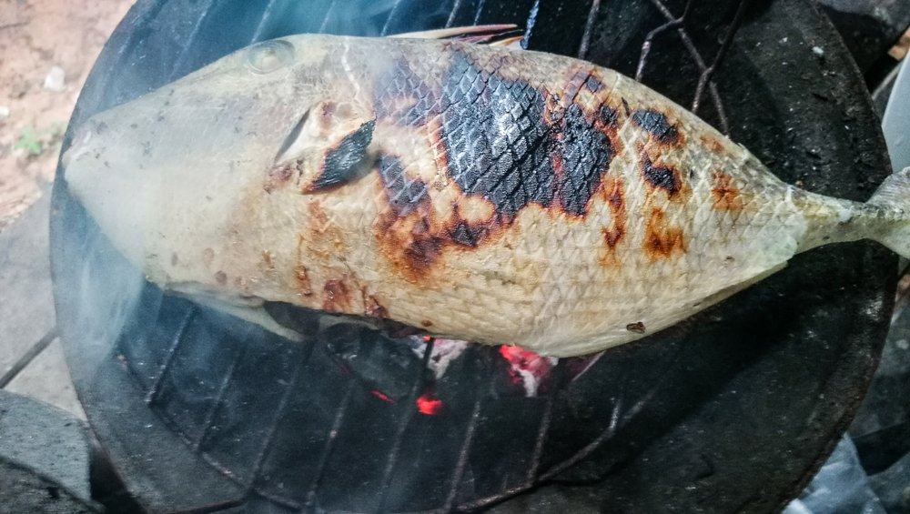 triggerfish on a grill