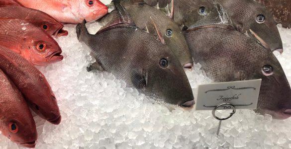 whole triggerfish on ice