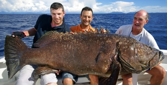 3 men on a boat holding a giant grouper