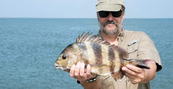A fisherman is holding a fish Southern sheeps head