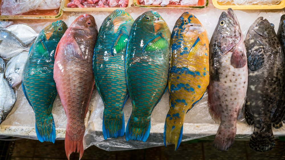 Colorful parrotfish are sold in a popular marketplace