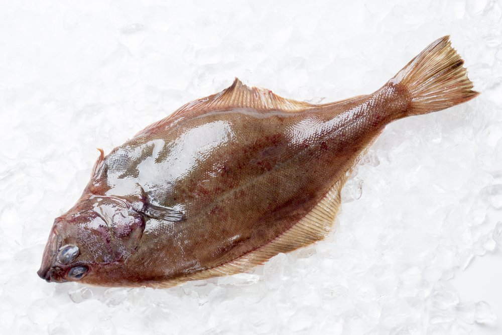 Brown Flounder Flatfish on ice