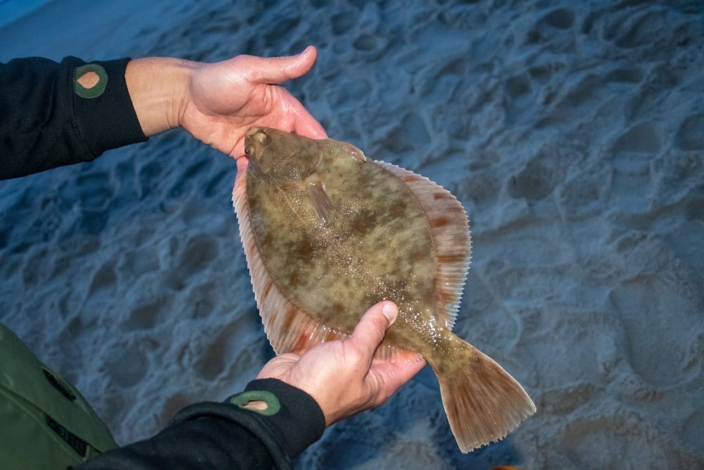 Types of Flatfish The Complete Guide