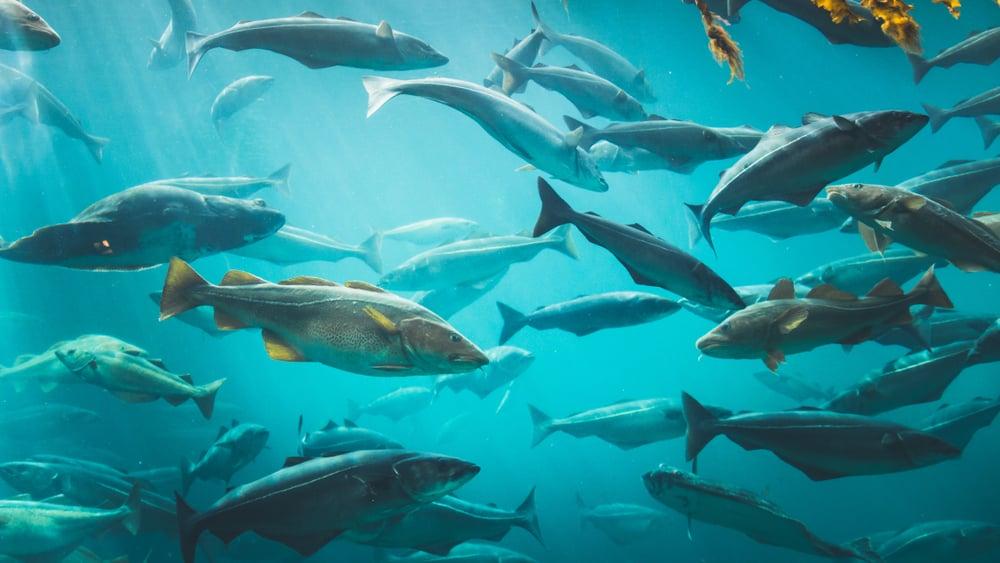 cod school swimming