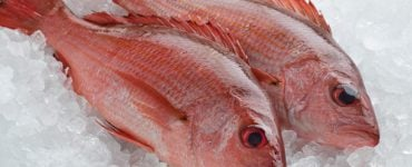 Vermilion Snapper And Red Snapper What's the difference (Red Snapper)