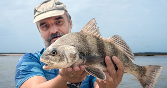 A fisherman is holding a fish black drum