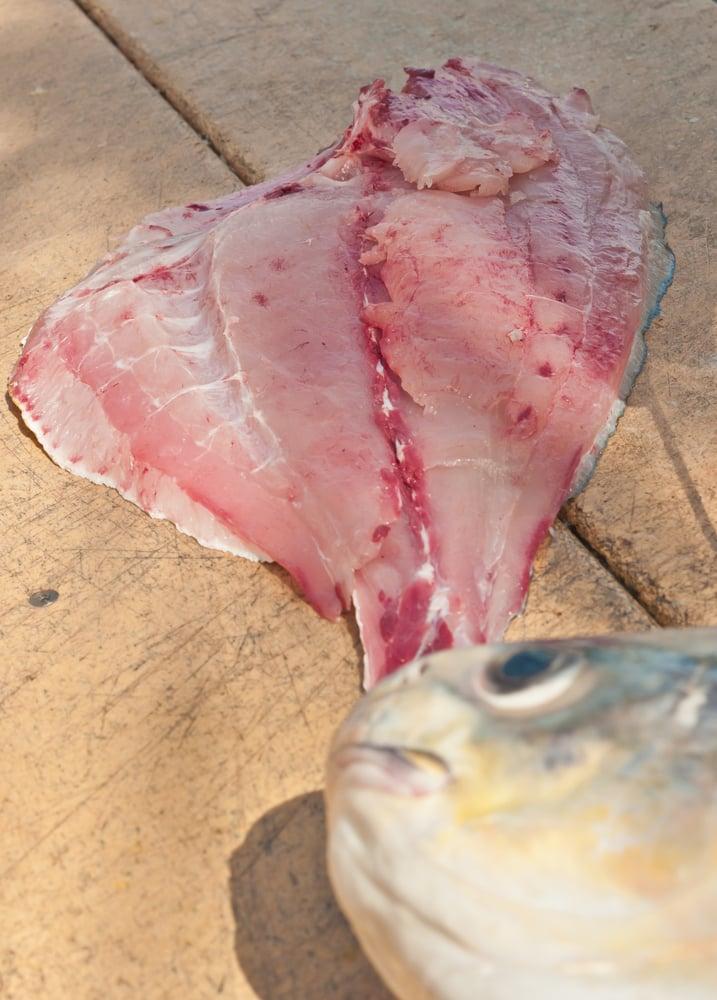 fillet of a twelve pound permit fish