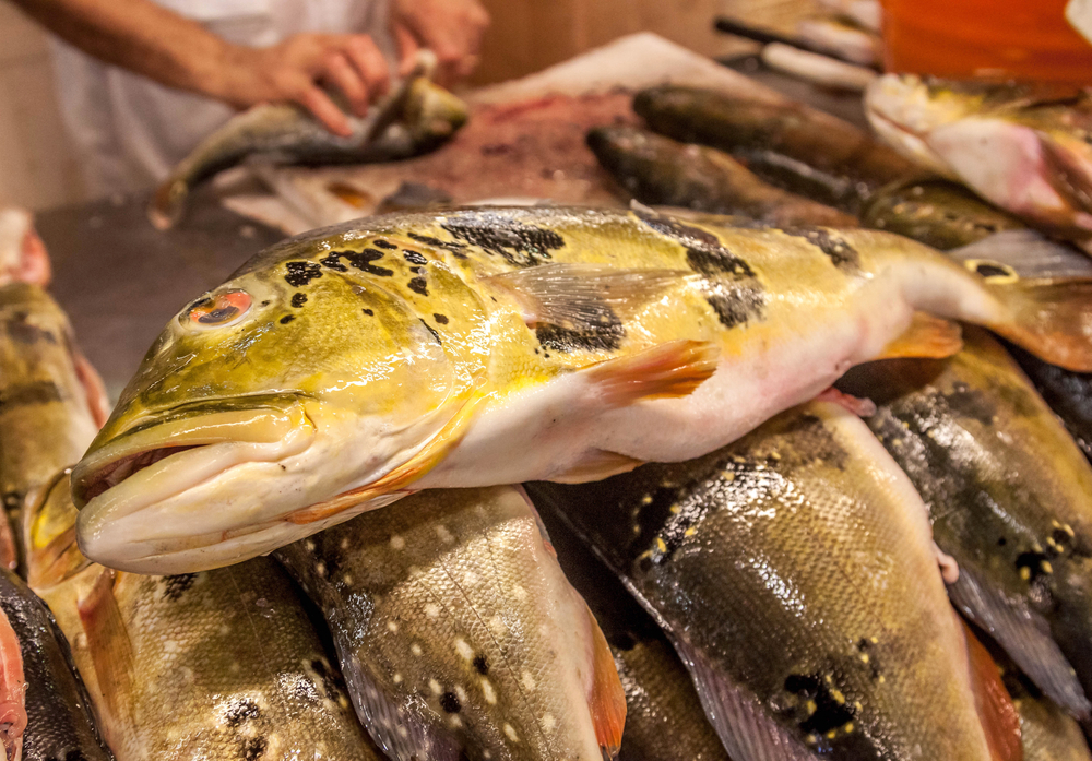 peacock bass for sale at a fish market